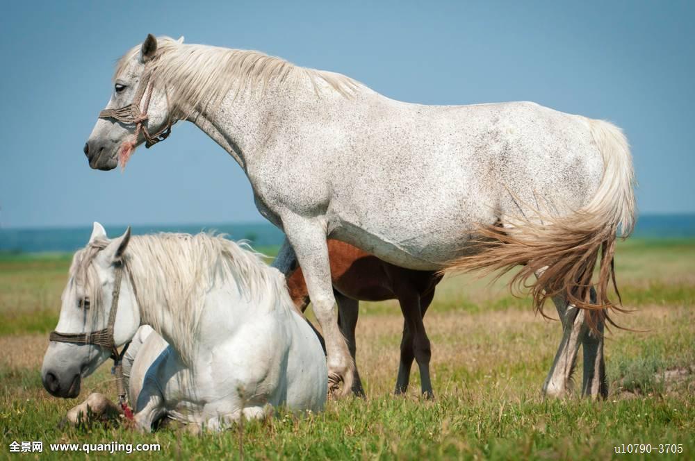 动作,动物,幼兽,漂亮,新生,栗子,乡野,乡村,可爱,驯服,耳,骑马,马图片