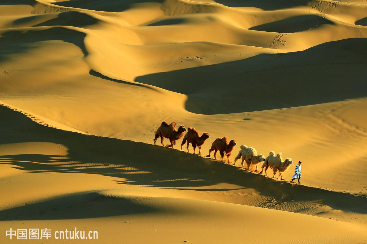 丝绸之路上的沙漠驼铃图片
