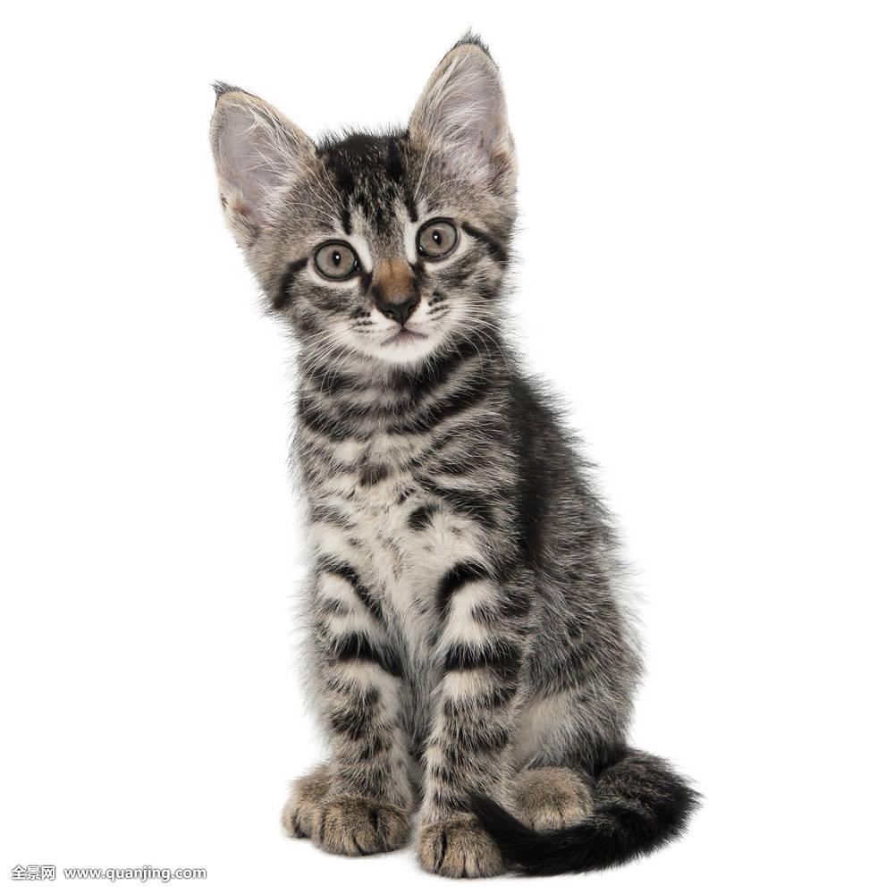 背景,表情,脸,怪相,一个,吃惊,奇怪,动物,专注,猫,可爱,眼睛,猫科图片图片