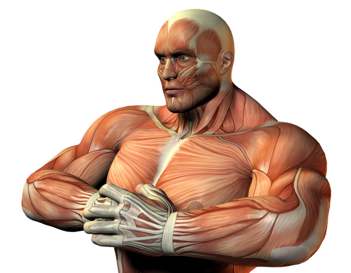 肌肉_上身运动员