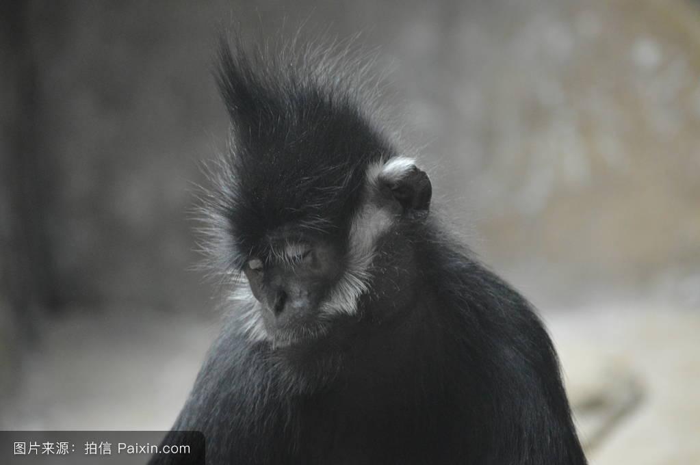 鬓角白�y�+�.�9.b9c��f�_弗朗索瓦�%8f�猴