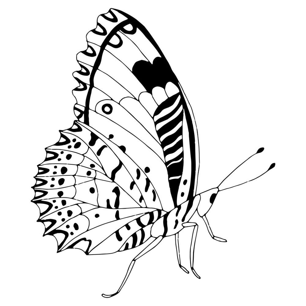 动物,对称,黑色,蝴蝶,黄油,昆虫,轮廓,设计,矢量图,图片规格,纹身图片