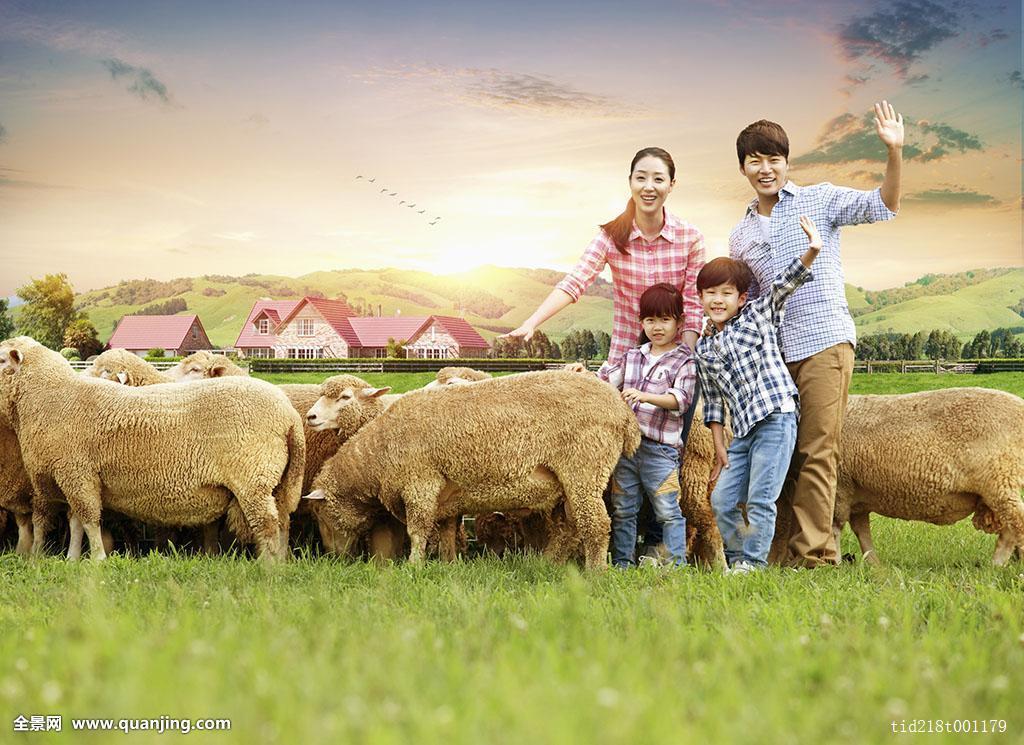 和谐��)�h�zf�e)_和谐,家庭,绵羊,草地
