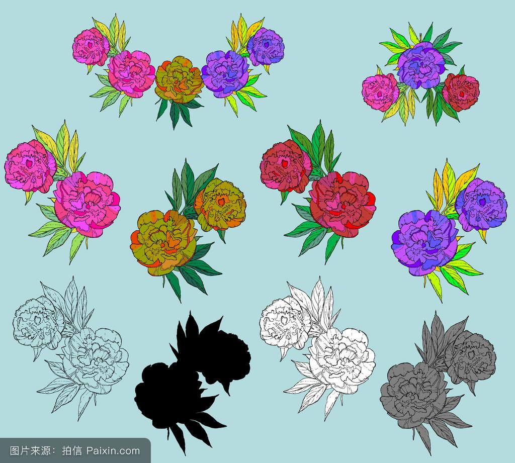 花,开花,绘画,分离,花园,白色,向量的牡丹,水彩画,剪贴画,手绘,牡丹图片