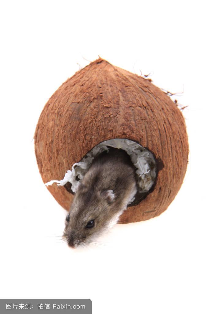 房子,哺乳动物,蜗牛,美丽的,住房,啮齿类动物,头发,鸟,建筑学,仓鼠冒险岛蓝木材特米图片