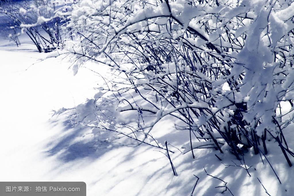 自然的蓝色树自然木材雪霜冷冻天气圣诞节冬天layaer