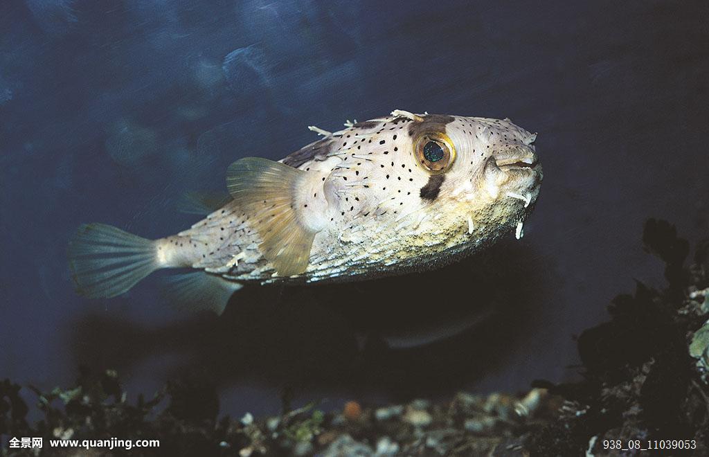 动物,动物主题,自然,野生动物,海洋,生物学,鱼,硬骨鱼纲,海洋生物