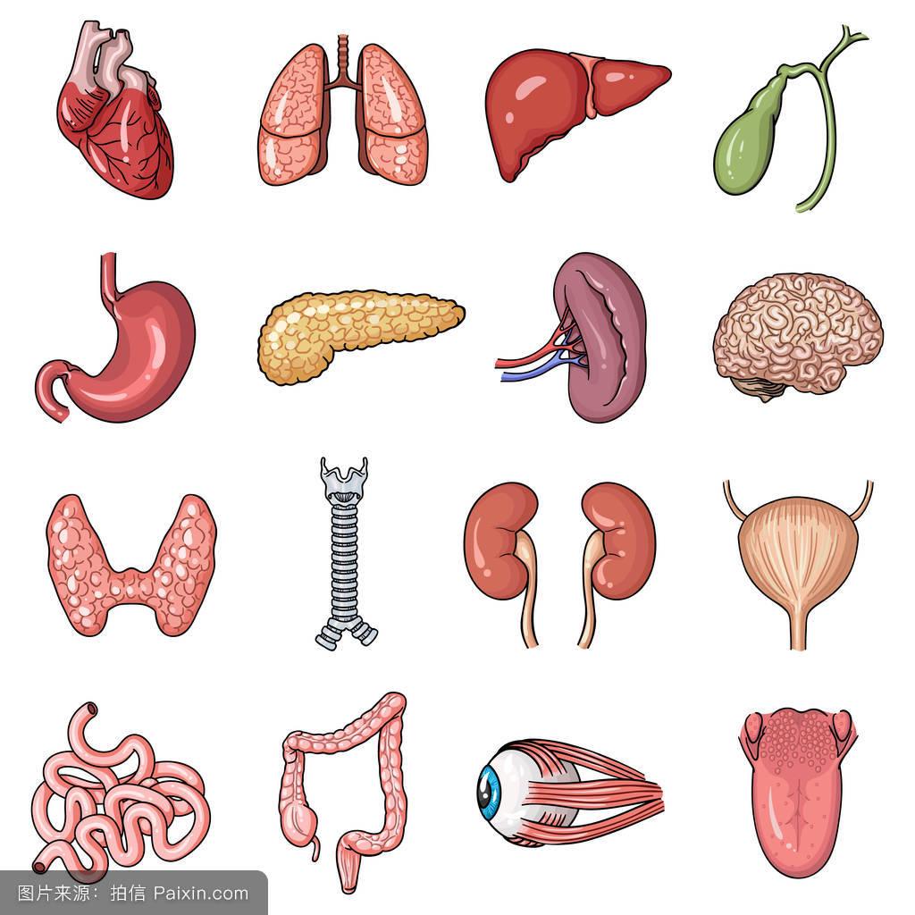 男人腰肺&f��yf�x�_卡通,膀胱,标志,尿的,符号,舌头,肠,肾,肺,分离,收集,气管,脑,人类