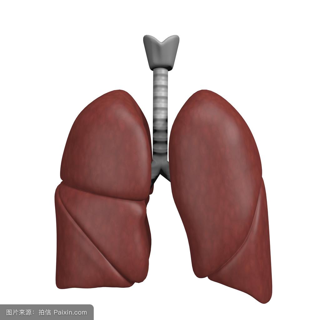 男人腰肺&f��yf�x�_本质的,疾病,系统,肺,分离,病,呼吸,肺的,身体,气管,健康,器官,喉,氧