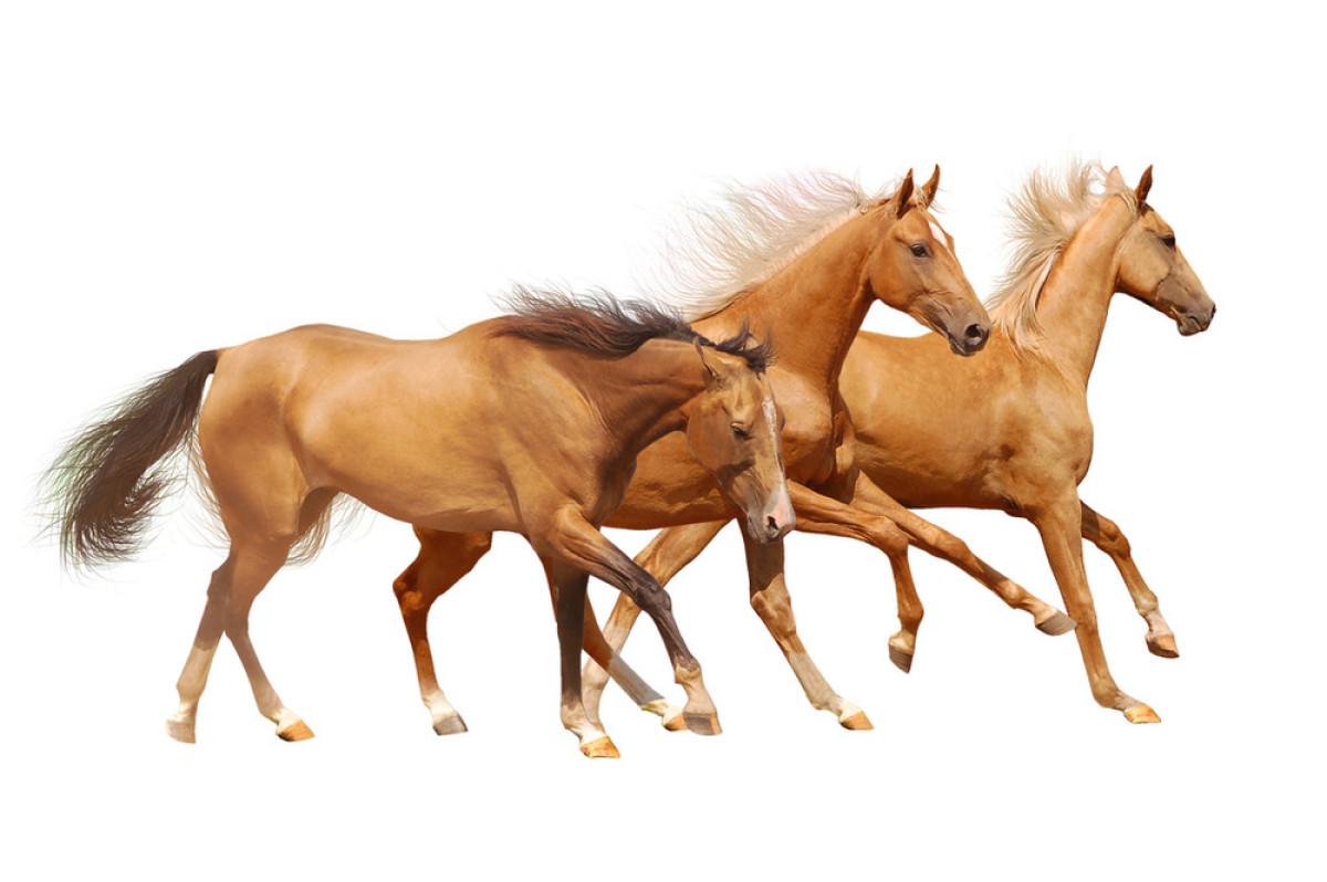 新疆三匹ki�.h:-a9��_三匹白骏马