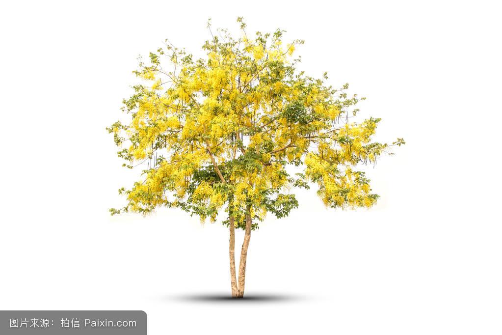 什么是瘺a��aX��i�_纹理,美丽的,新鲜的,淋浴,夏天,自然,家庭,瘘,花,国家的,植物区系