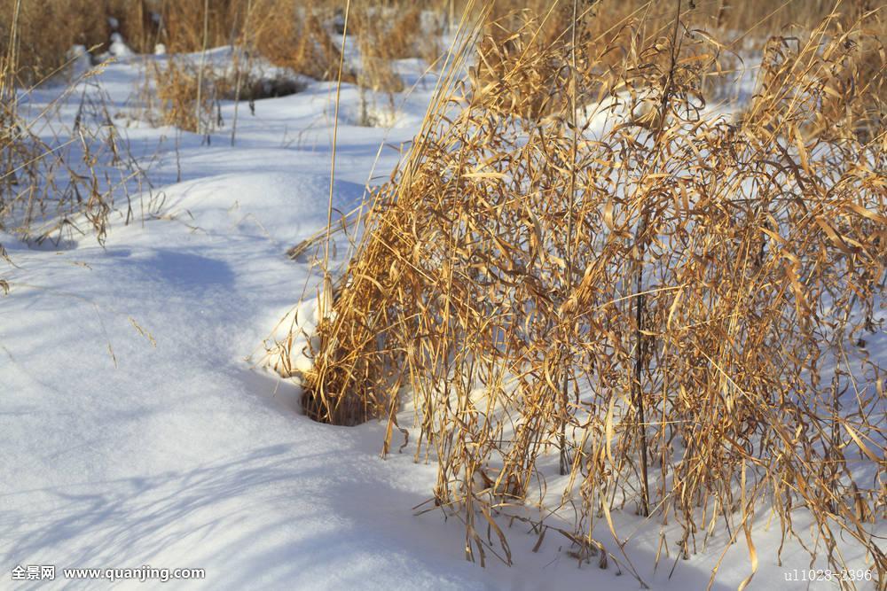 俄罗斯,欧洲,冬天,寒冷,雪,自然,风景,景色,乡野,乡村,春天,药草图片