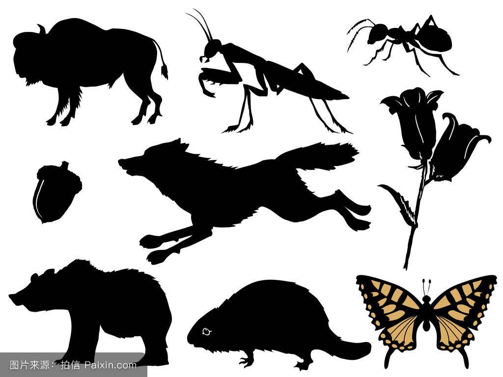 蚂蚁小说画分享展示穿越成蝙蝠的耽美森林图片