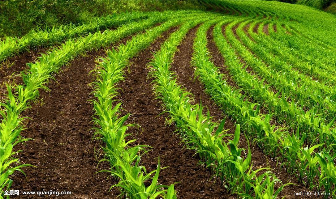 乡村,自然,农耕,田园,绿色,夏天,夏日,灌木丛,春天,户外,英亩,菜园图片