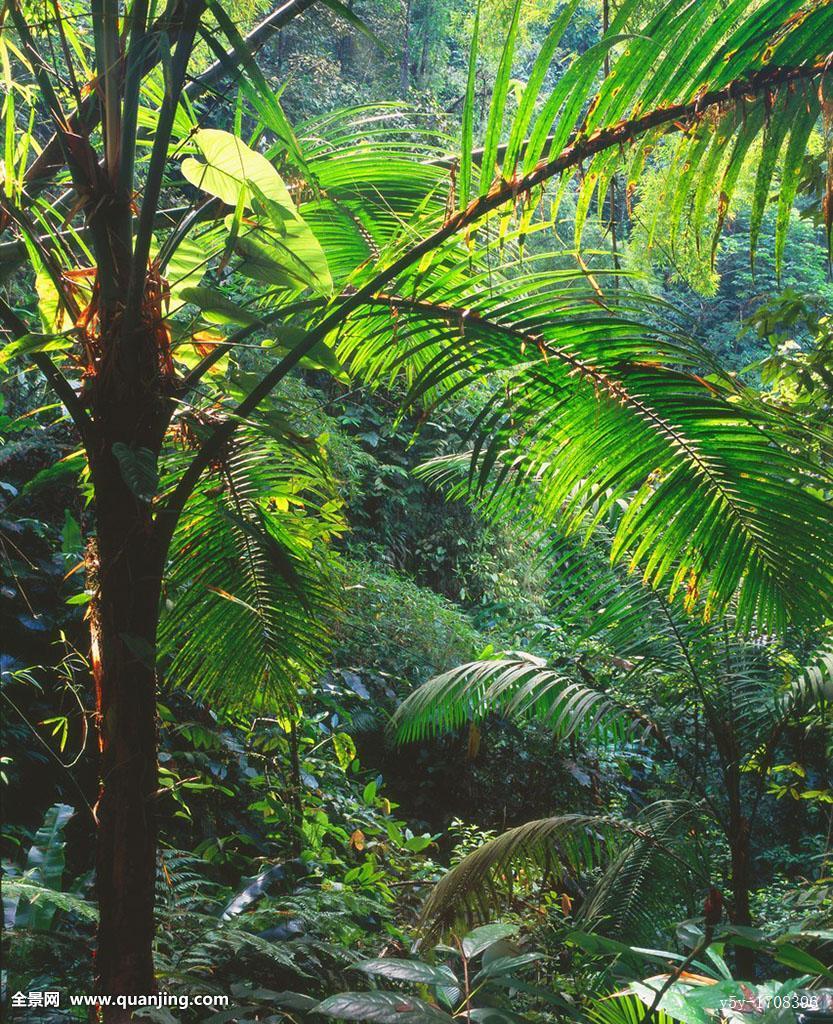 探险,生态,环境,树林,岛屿,丛林,风景,可爱,神秘,无人,棕榈树,照片
