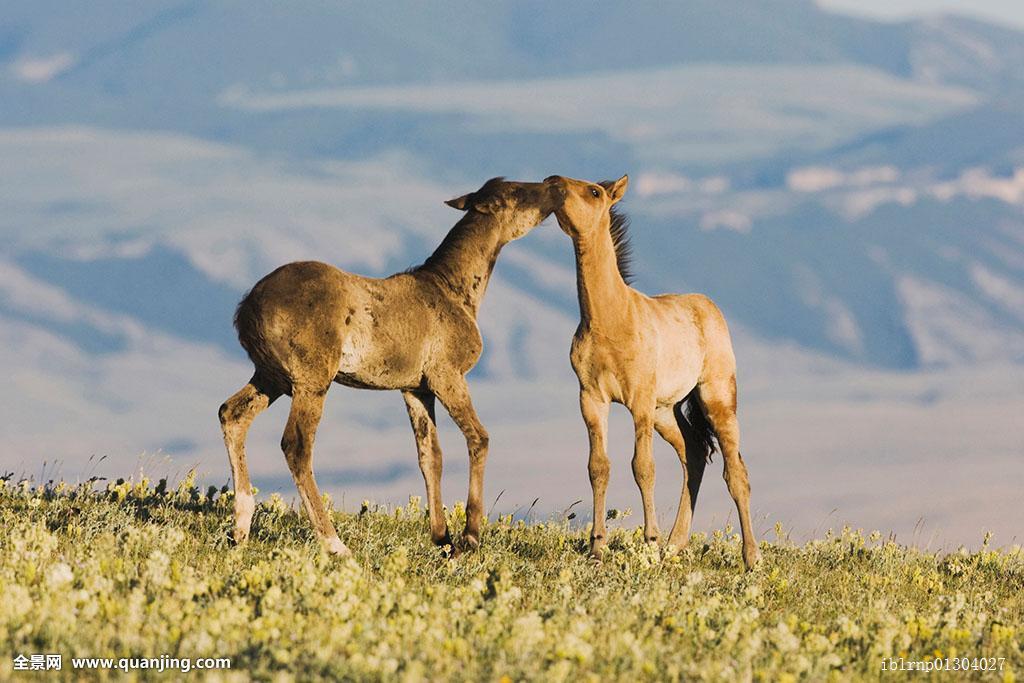 美国zoop与马
