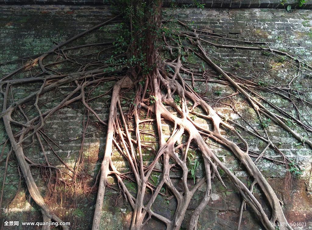 什么样的树根都可以用来做根雕么