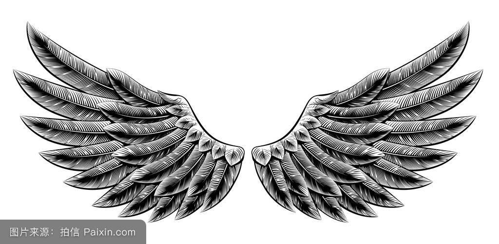 设置,横幅,削减,一对,哥特式,素描,切,动物,鹰,羽毛,插图,伸出的,纹身图片