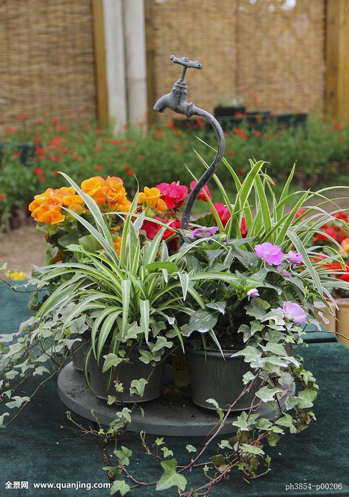 园艺设计绿色植物花卉展图片