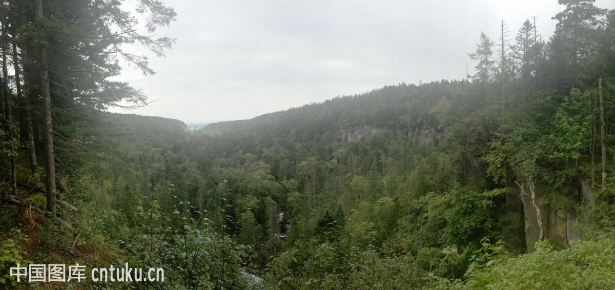 长白山的原始森林图片