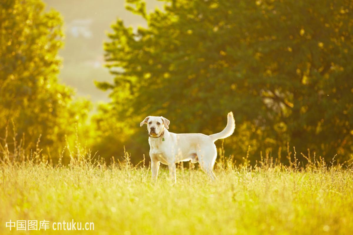 猎犬,绿色,气候,犬科,日出,森林,天气,田园风光,肖像,幸福,一只动物图片