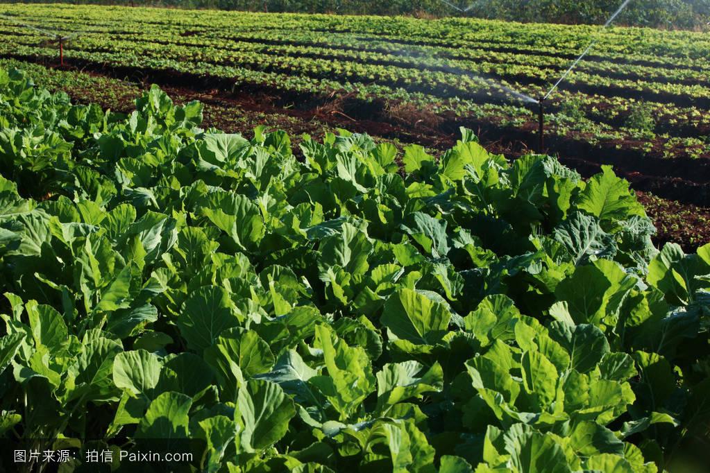 胡��.*�.��-a9��_有机的,地球,新鲜的,自然,胡萝卜,健康的,素食主义者,花园,农场,吃