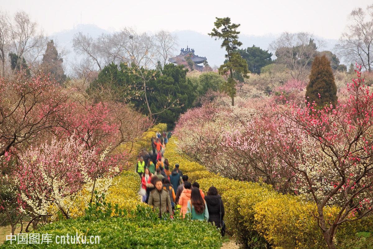 南京著名景点梅花山