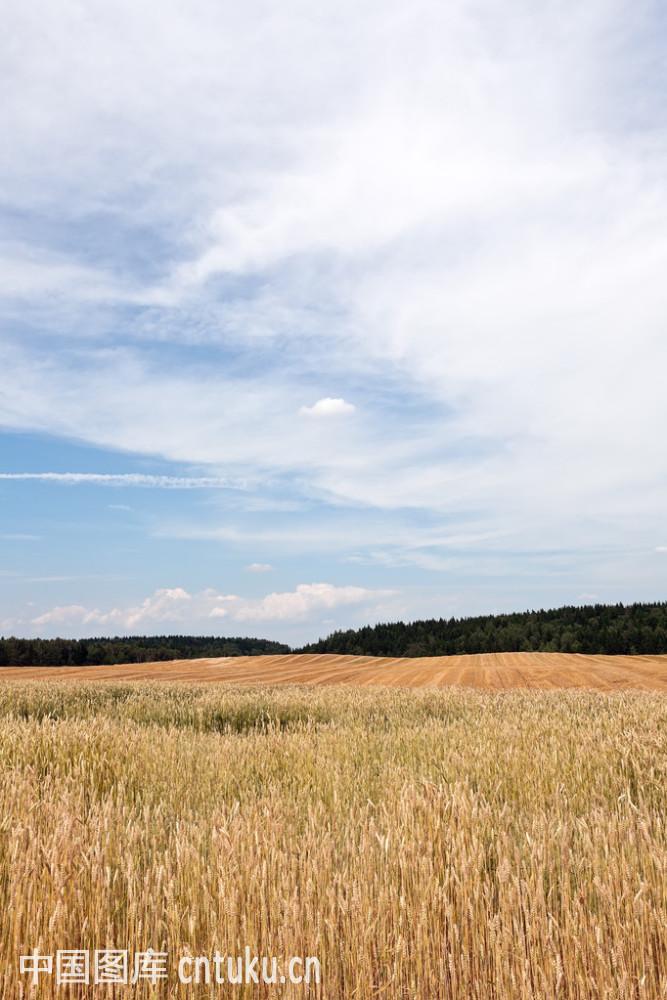 农村垹l`�af�n�,��%_农村的夏天lsndscape