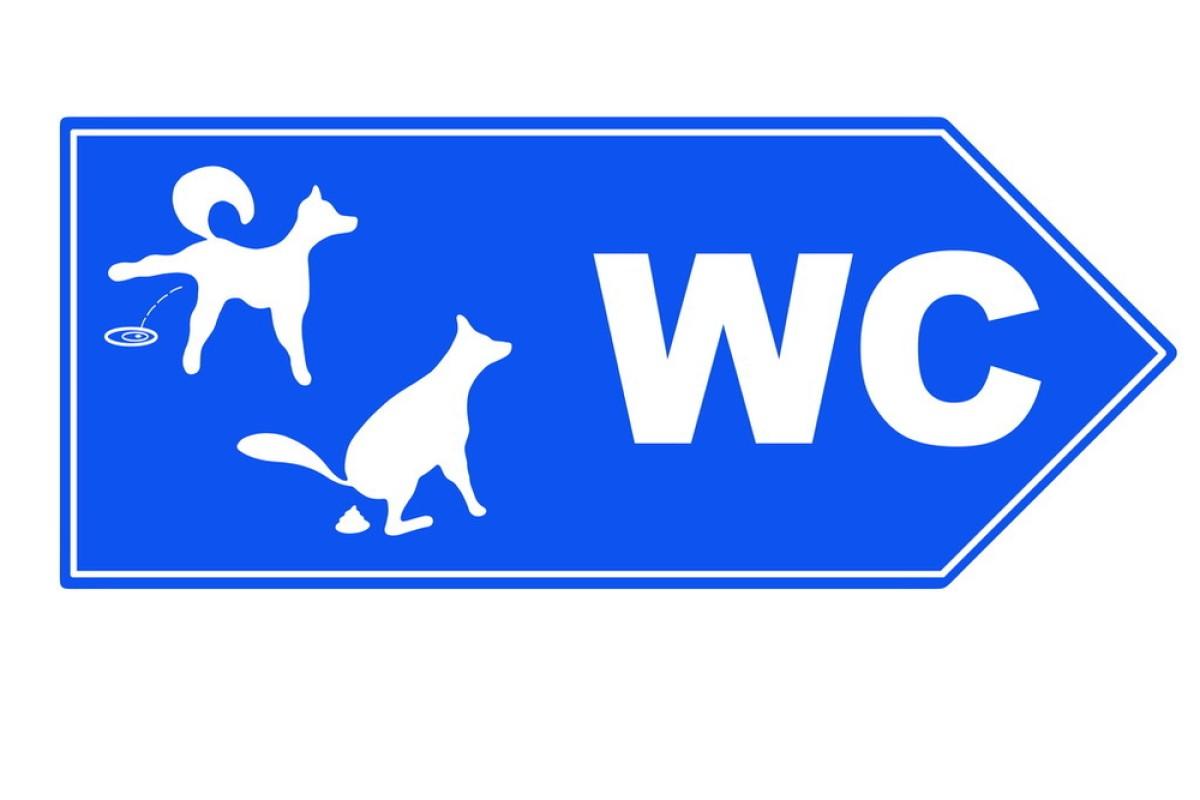 被抛弃的,壁橱,标志,布告栏,锅铲,城市,宠物,动物,都市风光,法学,公共图片