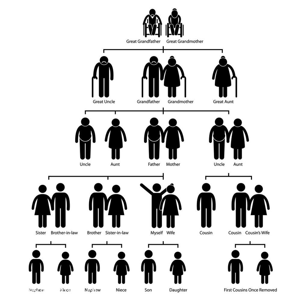 族谱家谱图棒图象形图标图片