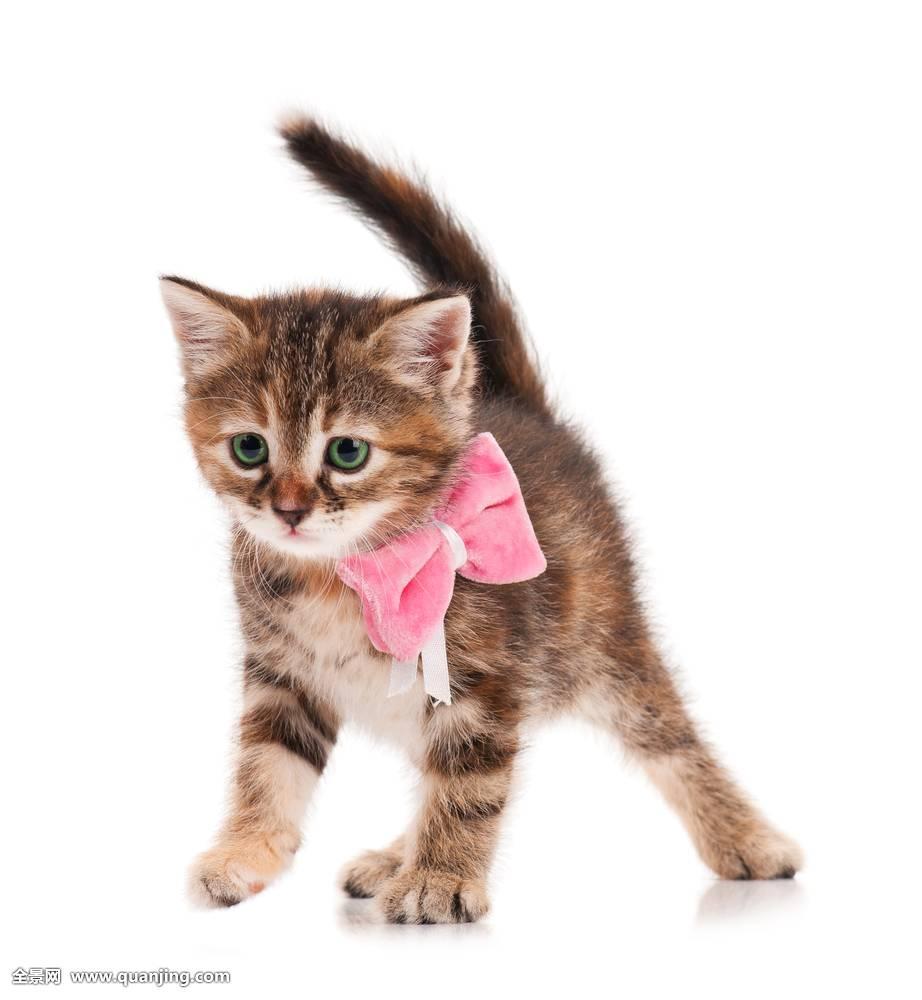 壁纸 动物 猫 猫咪 小猫 桌_表情大全