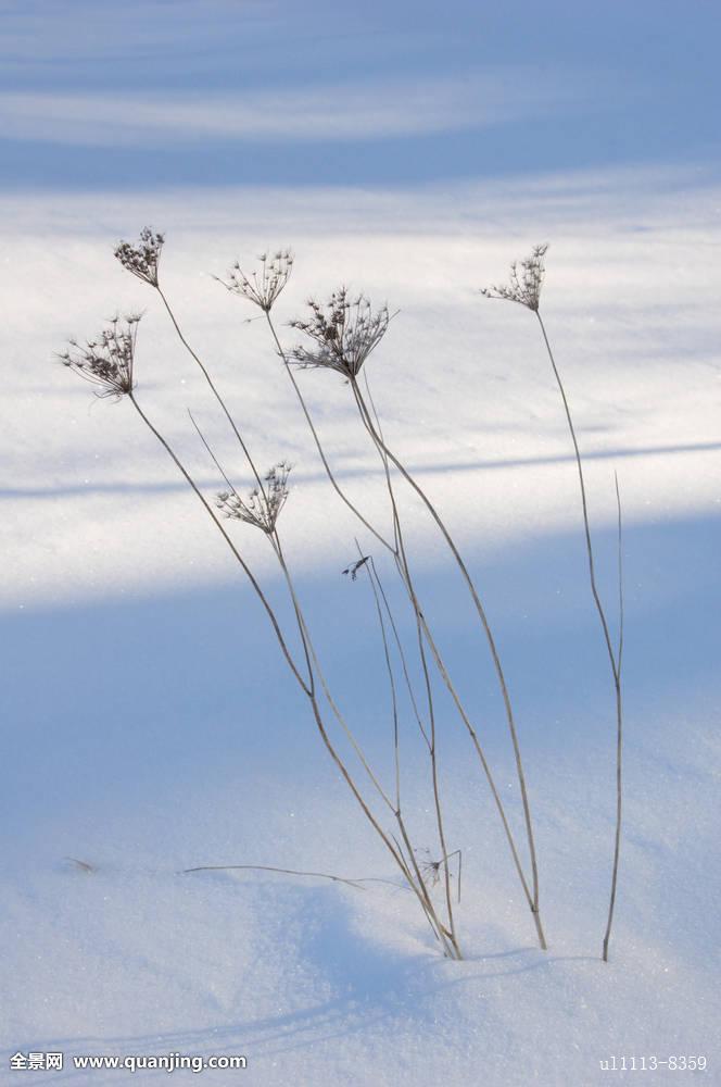 干草,叶片图片