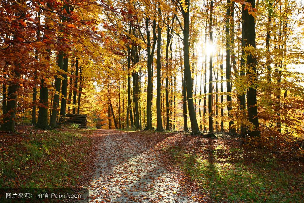 阳光,景观,美丽的,分支,日光,叶,自然,秋天,树干,方式,树,风景,路径图片