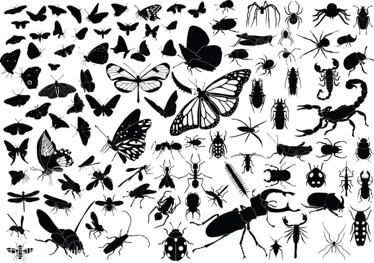 100昆虫图片