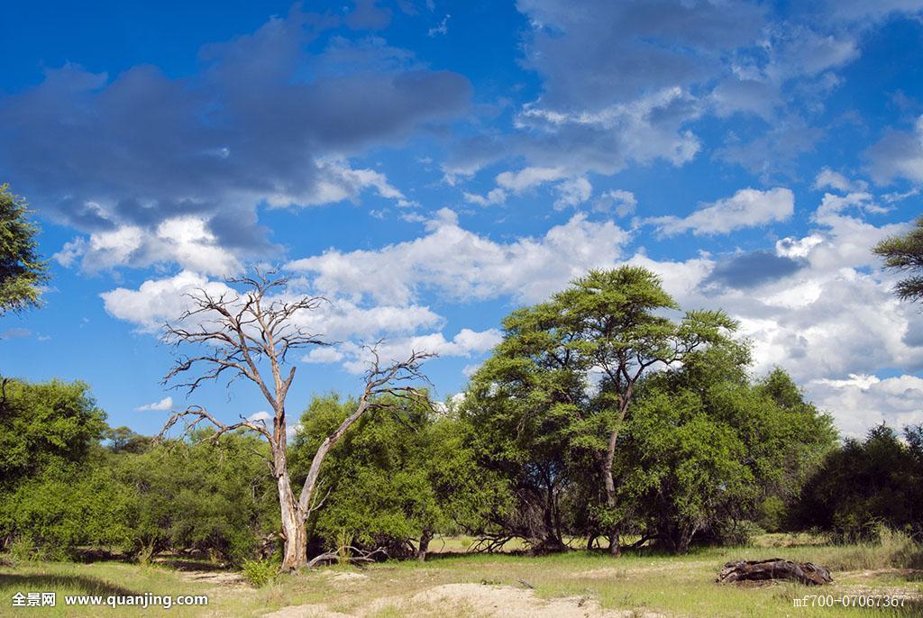 葵_禁猎区,纳米比亚,非洲