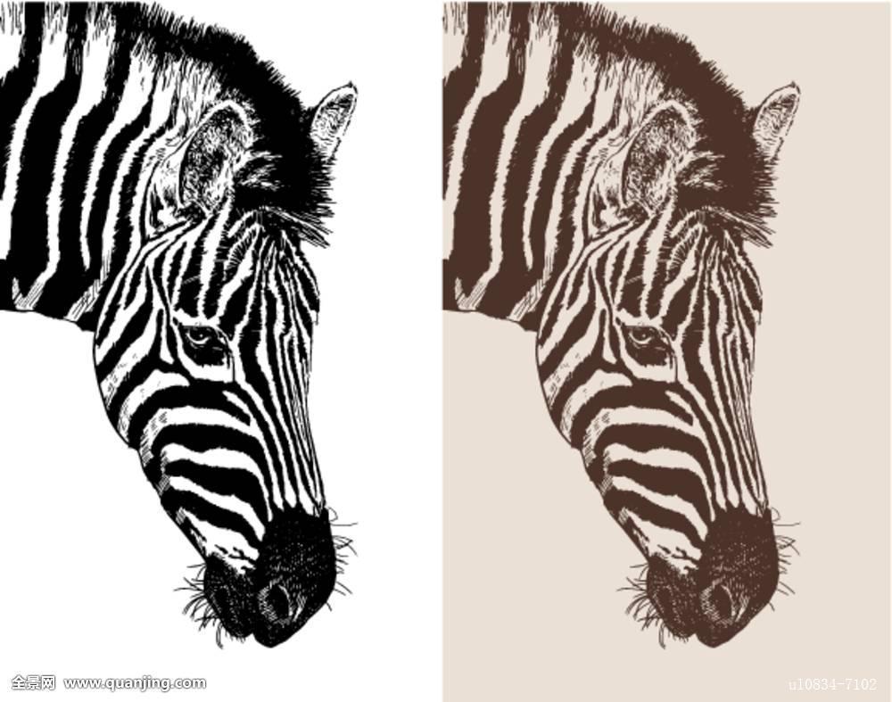 艺术品,头部,斑马,数码,素描,动物,黑色,黑白,绘画,深褐色,隔绝,插画图片