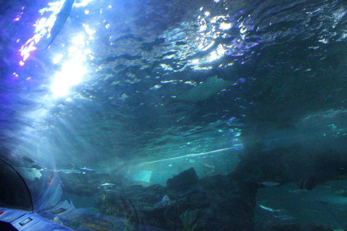 鱼类,稀有,物种,怪鱼,海底鱼类,奇特,鲨鱼,美丽景象,海洋世界,群鱼图片