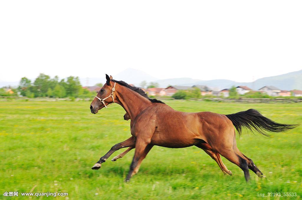 漂亮,马,自然,跑,家族图片