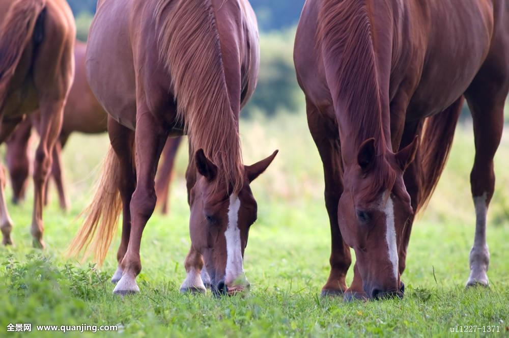 野生动物,自然,西部,动作,漂亮,蓝色,云,彩色,农场,草,绿色,鬃毛,母马图片
