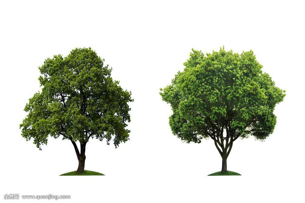 黑塔子树有毒吗对人身有害吗