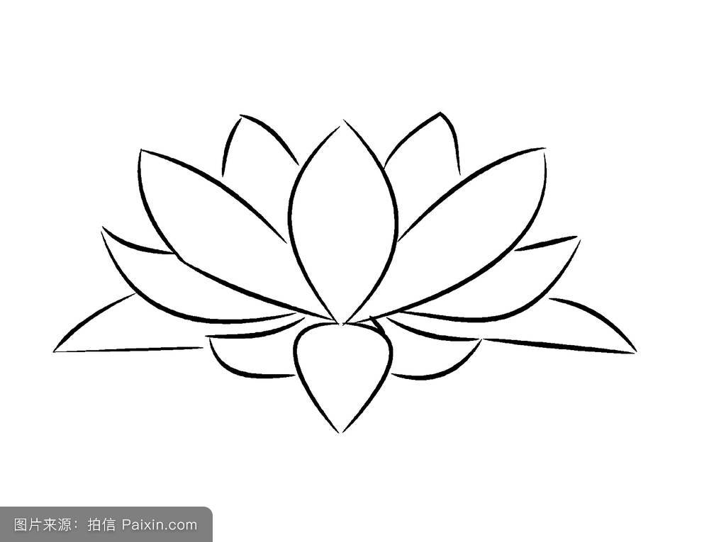 clashot,县荷花,填满,花,莲花,艺术,照片,岩石,绘画,黑白,白色,你的图片