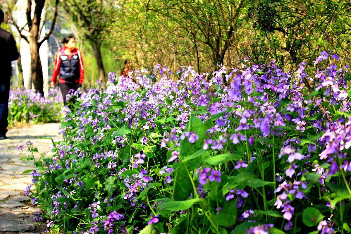 南京林业大学风光图片