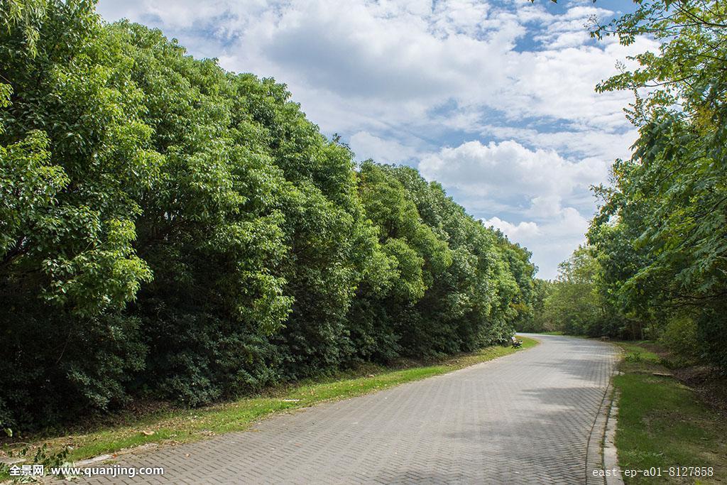 上海奉贤海湾国家森林公园图片