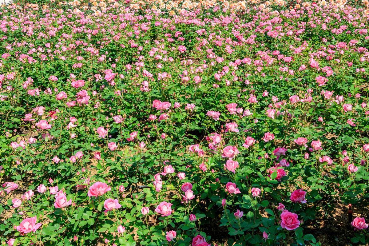 游宁波植物园100字作文图片