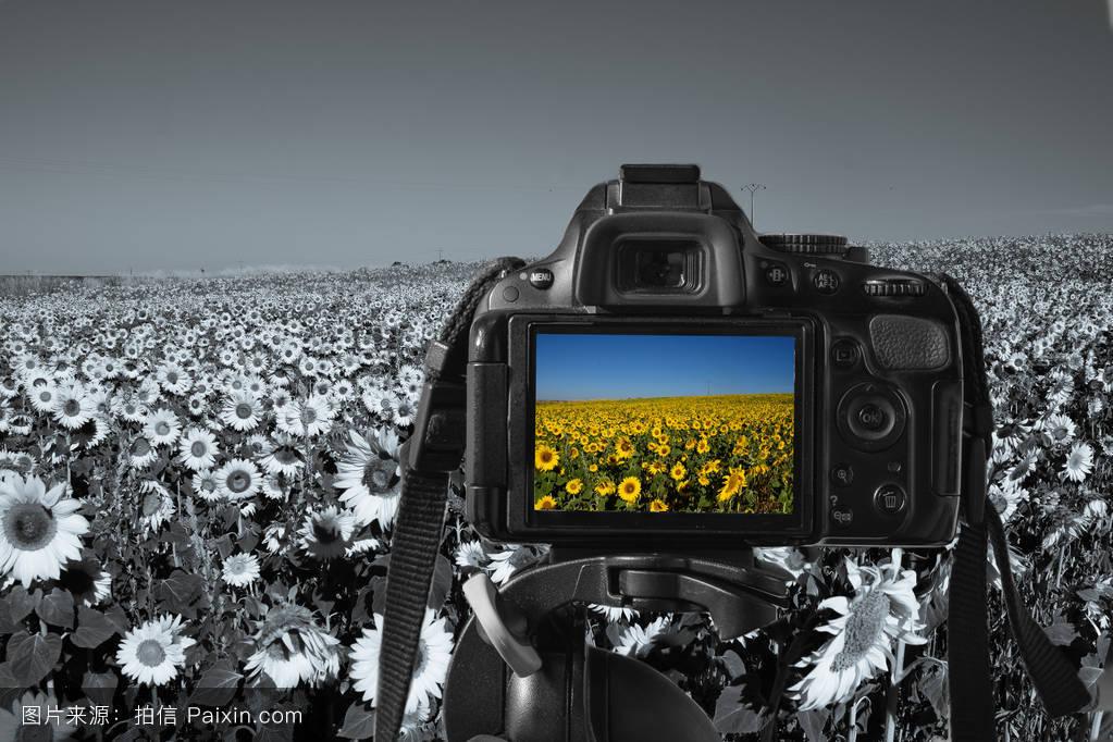 http://img1n.soufunimg.com/viewimage/jiancai/tbjiancai/201212/17/680/5e16716f805e5bee70aeb7475244e829/700x1000.jpg_camera with a colorful image of sunflower on the live-view