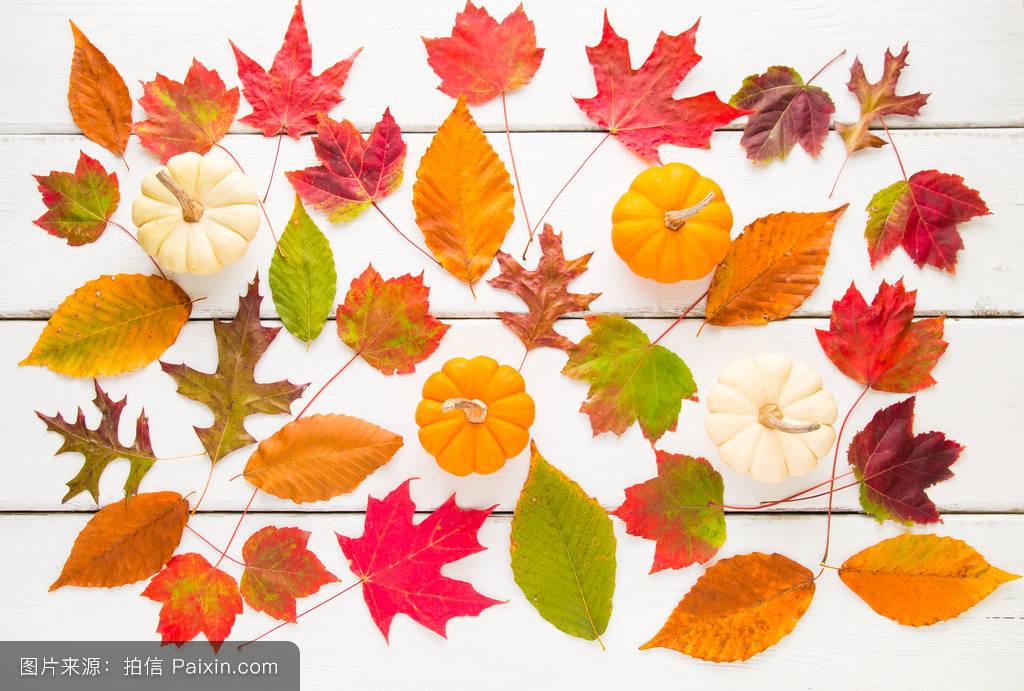 作文秋天的树叶真美呀360字图片