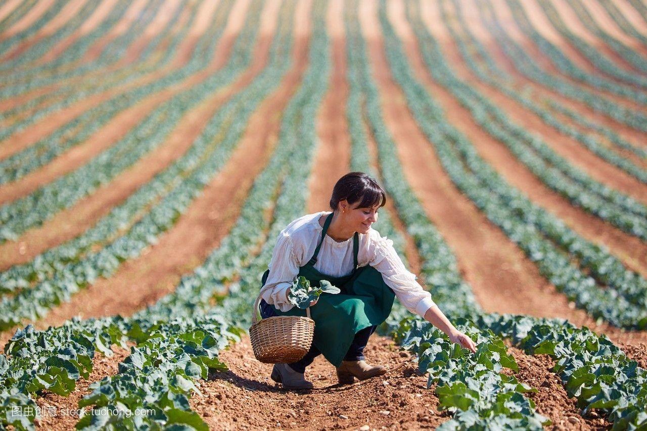 欧洲,农业,西兰花,纳瓦拉,农民,田地,西班牙,西班牙语,彩色图片图片