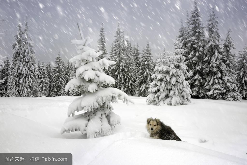 可爱极了,户外的,向下,宠物,孤独的,空气,云,毛皮,背景,环境,树,牧羊图片