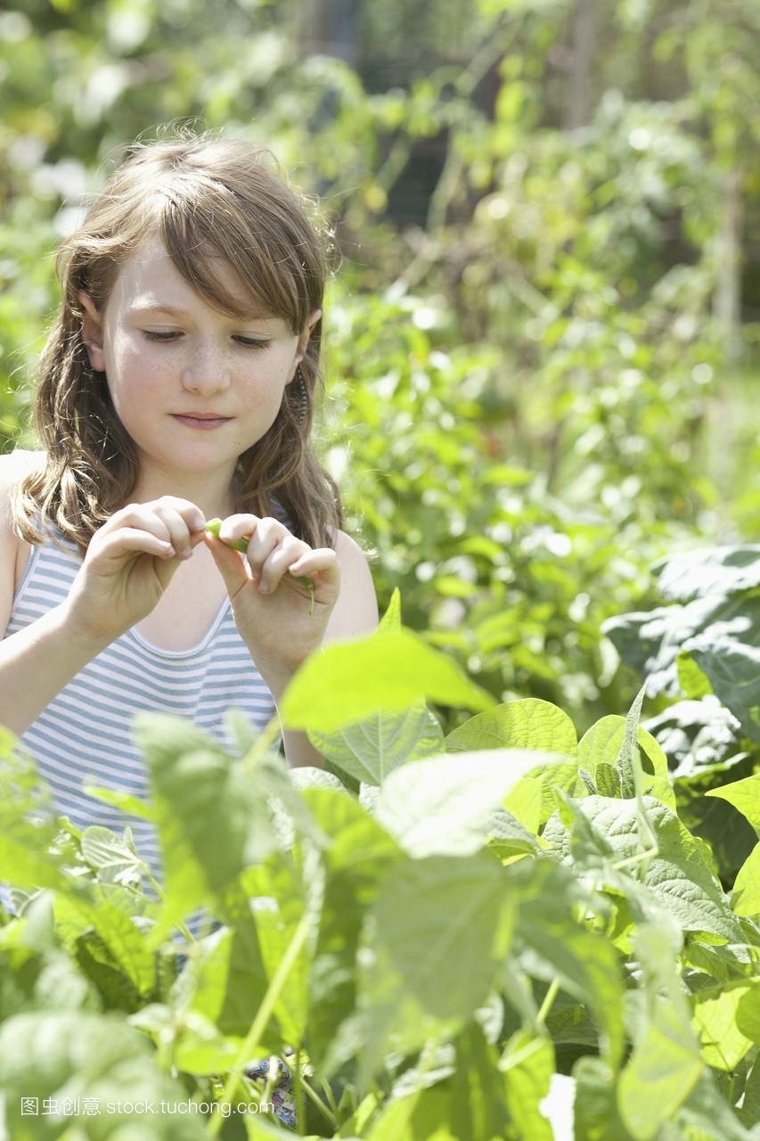 豆荚,裁,食品,头和肩膀,纯净,幸福,童年,平头,生活简单,视角,小孩子图片