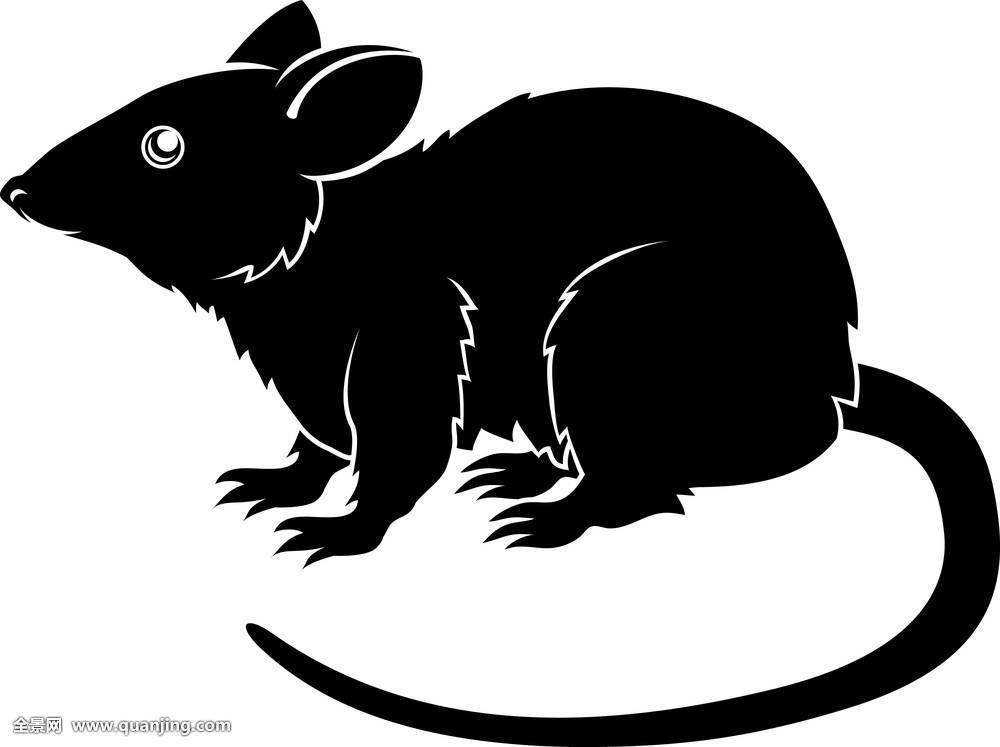 插画,单色调,老鼠,神话,新,害虫,啮齿类动物,剪影,星星,时尚,纹身图片